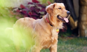 Harlem Animal Hospital: Exam and Vaccinations, Tests, or Health Package for a Dog or Cat at Harlem Animal Hospital (Up to 61% Off)