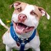 44% Off Pet Sitting and Dog Walking