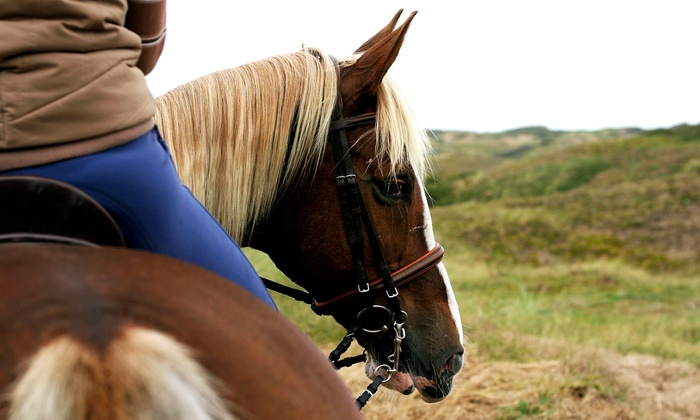 M & M STABLES - Multiple Locations: 60-Minute Horseback Trail Ride or Private Lesson at M&M Stables (Up to 55% Off). Five Options Available.