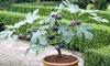 Set mediterrane fruitbomen