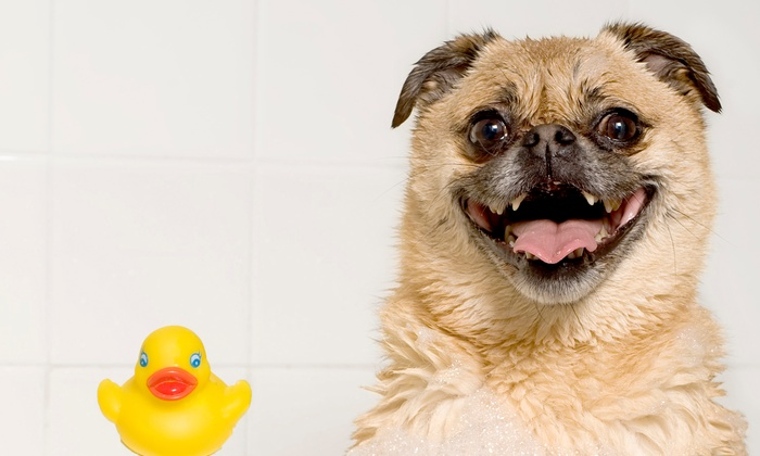 Aunt Tina's Pet Spa - Phoenix: Full Grooming Service at Aunt Tina's Pet Spa (Up to 52% Off). Four Dog Sizes Available.
