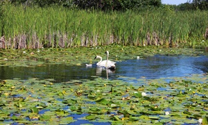 Wye Marsh Wildlife Centre: One-Day Pass for Two Adults or One Family to Wye Marsh Wildlife Centre (Up to 47% Off)