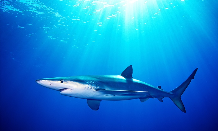 Snappa Charters - Snappa Charters: Shark-Cage Diving for One or Two, or Sunset Cruise for Two or Four from Snappa Charters (Up to 20% Off)