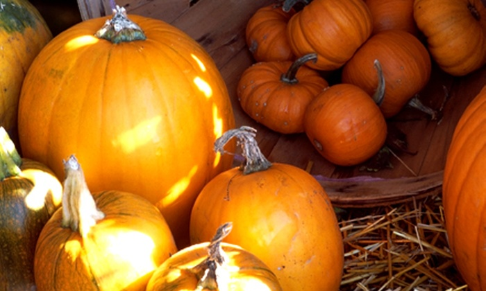 Stingy Jacks Pumpkin Patch - Boyd: Pumpkin-Patch Visit for Four at Stingy Jack's Pumpkin Patch (Up to 48% Off). Three Dates Available.