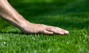 Pro turf: One Lawn Coloring Application or Lawn Care and Aeration Package from Pro turf (Up to 50% Off). Four Options.
