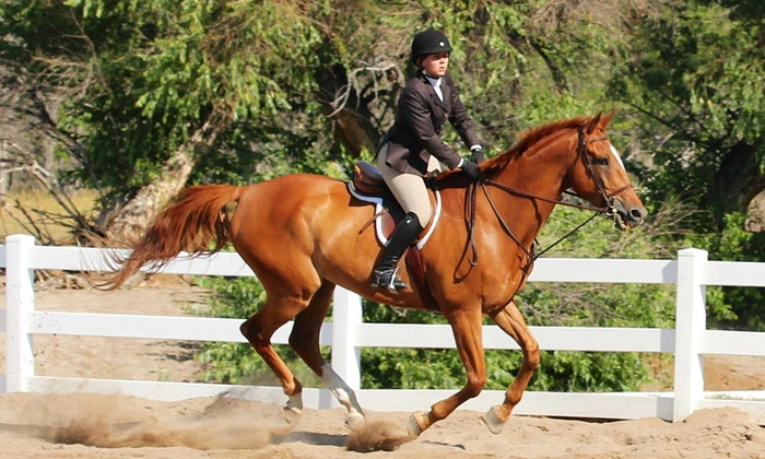 Helicon Show Stables - Parker: $119 for Four Private 60-Minute English Horseback-Riding Lessons at Helicon Show Stables ($240 Value)