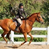 50% Off Private Horseback-Riding Lessons