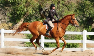 Helicon Show Stables: $119 for Four Private 60-Minute English Horseback-Riding Lessons at Helicon Show Stables ($240 Value)
