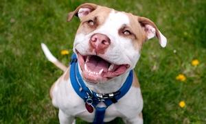 Premier Pet Sitters: $30 for $60 Groupon — Premier Pet Sitters