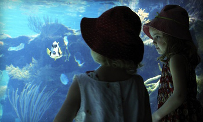 Idaho Public Aquarium - Central Bench: $9 for a Visit for Two at Idaho Public Aquarium (Up to $18 Value)