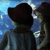 Idaho Public Aquarium – Up to Half Off a Visit