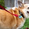 Up to 57% Off Dog Walks or In-Home Pet Sitting