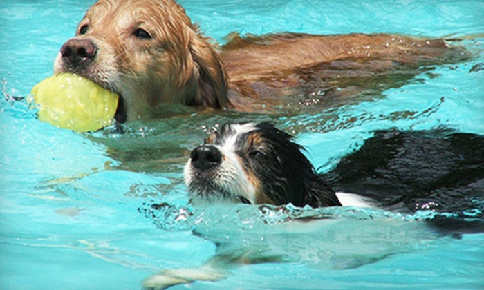 Alpha Dog Club - Near West End: Introductory Swim Session, 30-Minute Bodywork Massage, or Both for a Dog at Alpha Dog Club (Up to 60% Off)