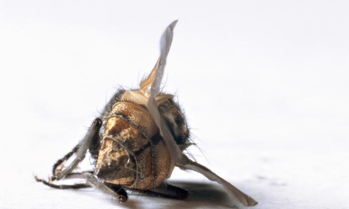 Southern Pest Control of Virginia - Washington DC: $64 for a Preventative Interior and Exterior Pest Treatment from Southern Pest Control ($300 Value)