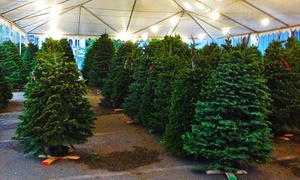 Mr. Jingles Christmas Trees: 5- or 10-Foot Tall Tree at Mr. Jingles Christmas Trees (Up to 50% Off). Two Locations Available.
