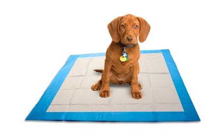Puppy Training Pads (300 Count)