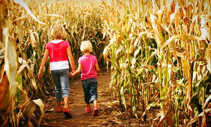 Campbell's Maze Daze - Lincoln: Fall Fun for Two or Four at Campbell's Maze Daze (Up to Half Off)