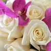 Half Off Floral Arrangements from Field of Flowers