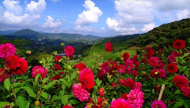 Cameron Highlands: 4* Hotel Stay 7