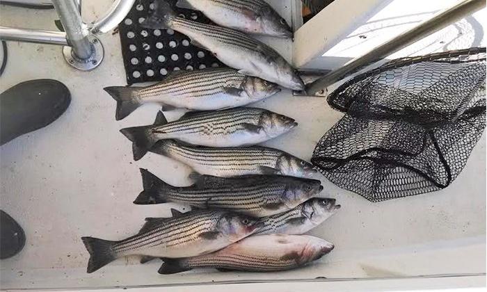 Fingeance Fishing Charters - Swan Quarter: $199 for Fishing Trip for Up to Four from Fingeance Fishing Charters ($400 Value)