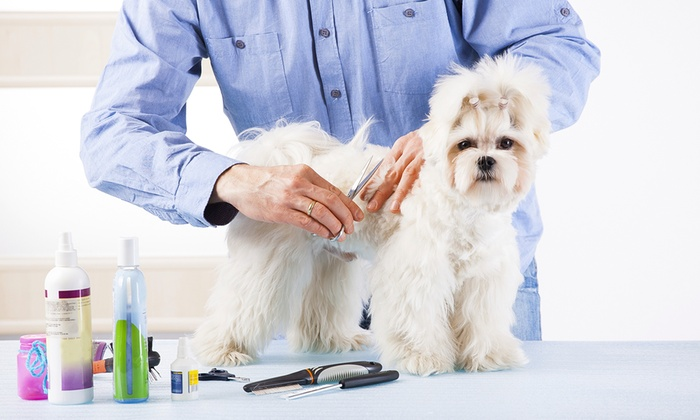 Online Dog Grooming Course Groupon Goods