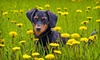 The Crate Escape, LLC - Mooresville: Two or Seven Days of Dog Daycare or Three or Seven Nights of Overnight Boarding at The Crate Escape, LLC (Up to 64% Off)