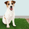 Companion Gear Indoor Dog Potty