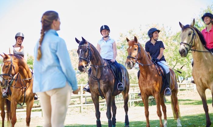 Oak Haven Performance Horses - Saratoga Springs: Up to 52% Off horseback-riding lesson at Oak Haven Performance Horses