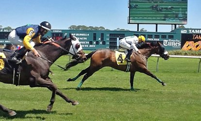 image for  Day at the Races for One, Two, Four, or Six at Tampa Bay Downs (Up to 56% Off)