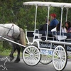 $5 For Horse-Drawn Carriage Ride