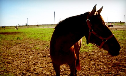 1-Hour Riding Lesson for 2 (a $100 value) - Riding High Stable in Katy