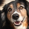 PAWS: Donate $10 to Help PAWS Nourish Stray and Abandoned Dogs and Cats
