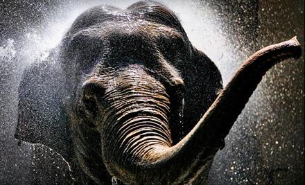 Admission for 2 (up to a $26 value) - Denver Zoo in Denver