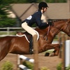 Up to 71% Off Horseback-Riding Lesson in Clarence