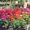 Half Off Plants and Gardening Goods in Glen Head