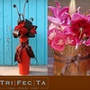 56% Off Flowers and Gifts at TriFecTa