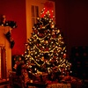 Up to 51% Off Christmas Tree in West Sacramento