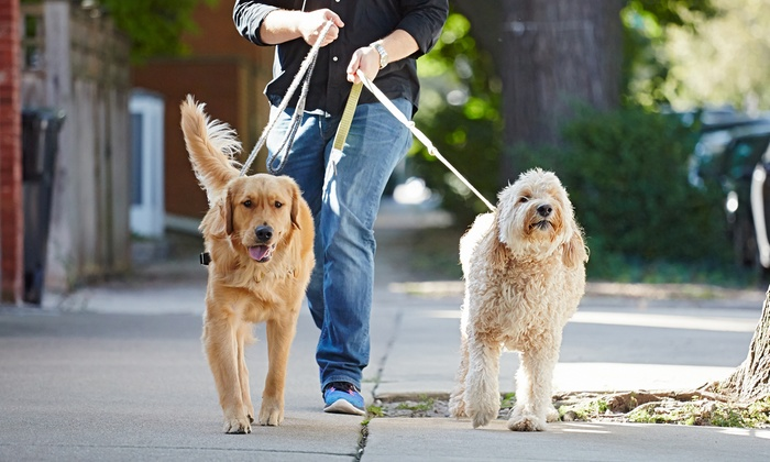 STL Happy Dogs, LLC - St Louis: Three or Five Dog-Walking Sessions for Up to Two Dogs from STL Happy Dogs (Up to 51% Off)