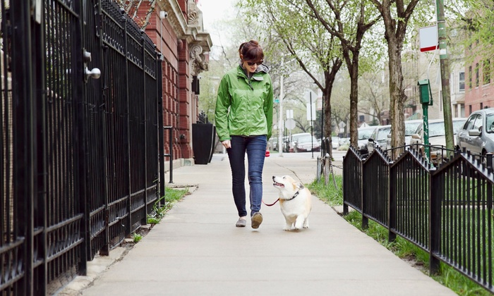 Raining Cats & Dogs - Washington DC: Five 20-Minute Walks or Visits for One or Two Dogs or Cats from Raining Cats & Dogs (Up to 60% Off)