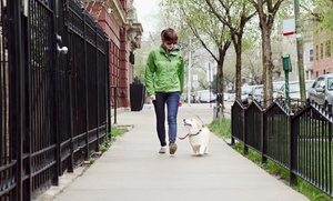 Raining Cats & Dogs: Five 20-Minute Walks or Visits for One or Two Dogs or Cats from Raining Cats & Dogs (Up to 55% Off)