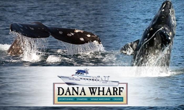 Dana Wharf - Dana Point: $29 for Two Whale-Watching Cruise Tickets from Dana Wharf