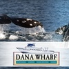 Up to Half Off Whale-Watching Cruise