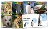 Zoobies by Zoobooks 6-Book Bundle: Zoobies by Zoobooks 6-Book Bundle