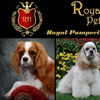 Royal Heirs Pet Spa - Country Overlook: $15 for a Full-Service Dog Grooming at Royal Heirs Pet Spa (Up to $65 Value)
