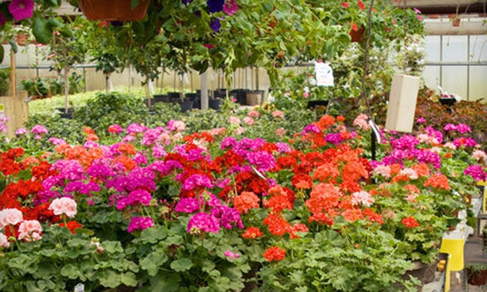 Dogwood Nursery & Landscaping - West Kelowna: $20 for $40 Worth of Plants, Trees, and Gardening Supplies at Dogwood Nursery