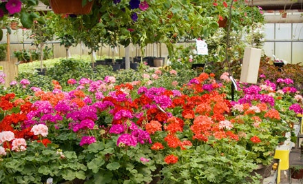 $40 Groupon to Dogwood Nursery - Dogwood Nursery & Landscaping in Westbank