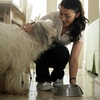 45% Off Pet Sitting Services