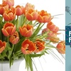 Half Off from Field of Flowers