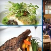 60% Off Fine Dining & Drinks at 398 West