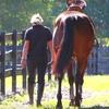 51% Off Horseback Trail Ride in Winter Garden